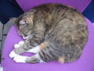 Kočka 2008
