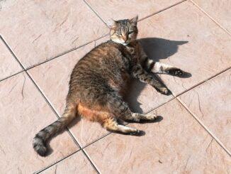 Kočka na dlažbě